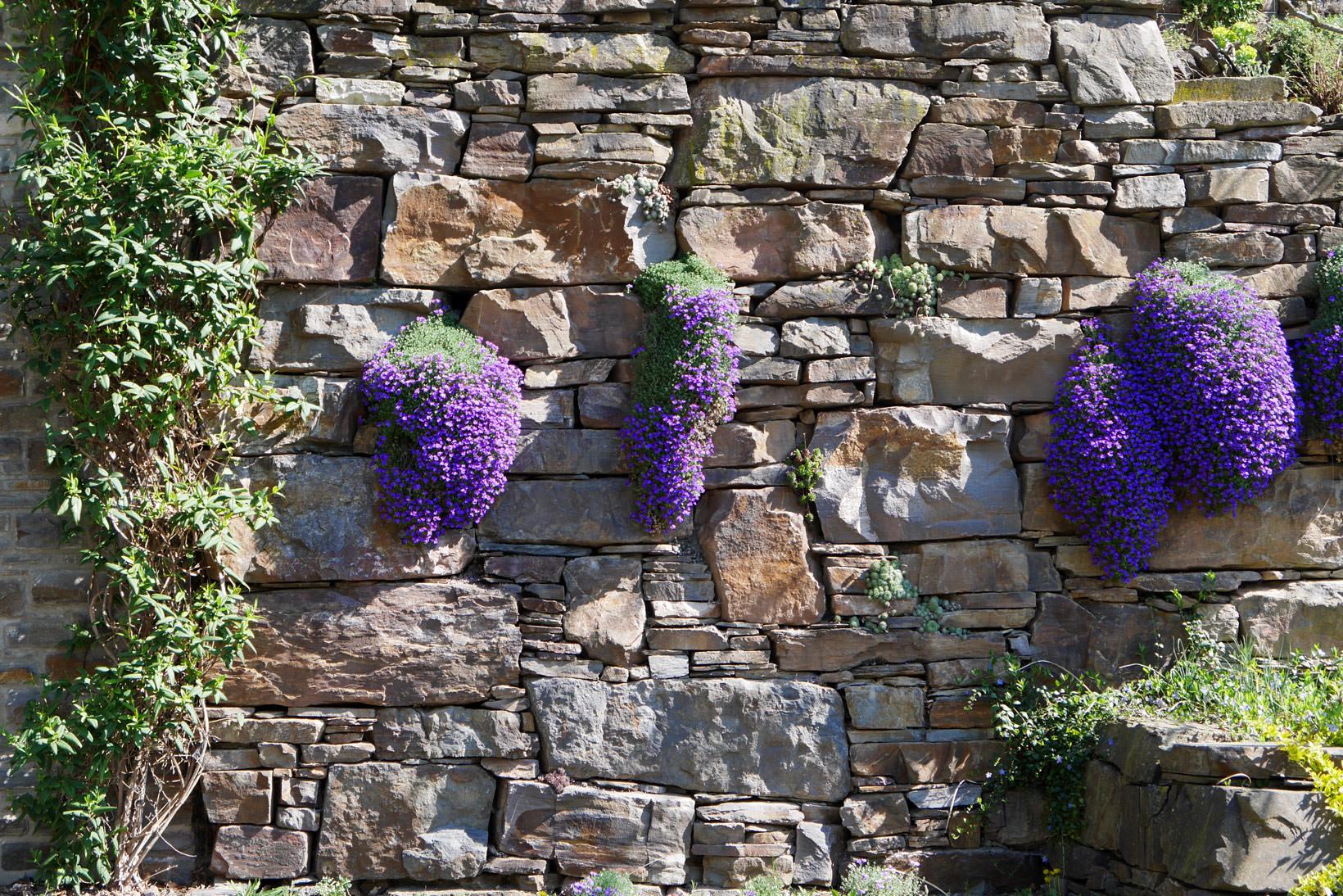 Mauer 10 gartengestaltung pearse danker for Gartengestaltung mauer